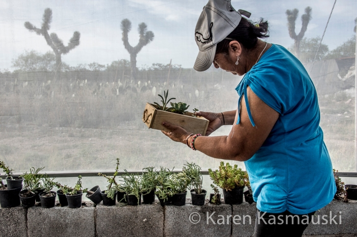 Member of the local women's group looks at the boxes of cacti they hope to see to a store in Mexico City.